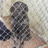 Rescued! - Chico Animal Shelter
